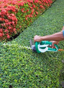 advies tuinonderhoud-haag snoeien